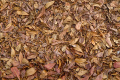 Dry leaves for background and texture Stock Photos