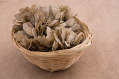 Dry leaves in a basket on brown background Royalty Free Stock Photos