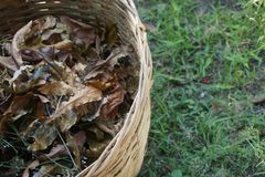 Dry leaves in a beautiful bamboo basket royalty free stock image