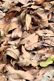 Dry leaves Stock Photos