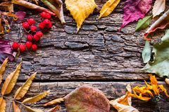 Dry leaves and berries on a wooden background mockup Stock Photography