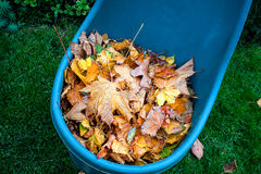 Dry leaves in blue cart Royalty Free Stock Images