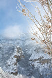 Dry leaves and branches covered with snow. And frost with snowy mountains on background, Armenia, Caucasus mountains Stock Photos