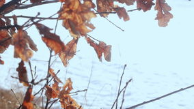 Dry leaves on branches of tree in autumn forest. Autumn tree stock video footage