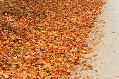 Dry leaves. Dry brown beech leaves at road side in autumn. These leaves can be very slippery when wet and are therefore often swept to the roadside as safety Royalty Free Stock Photography