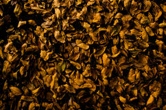 Dry leaves. Dry brown leaves on ground in dark tone effect royalty free stock photo