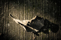 Dry leaves on a cement floor Stock Photos