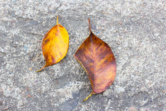 Dry leaves on the cement floor Stock Photos