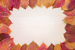 Dry leaves circumscribing a blank space Royalty Free Stock Images