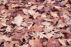 Dry leaves Royalty Free Stock Images