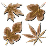 Dry leaves collection against white Royalty Free Stock Photo