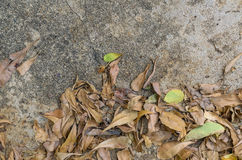 Dry leaves on dirty cement floor. With copy space Royalty Free Stock Images
