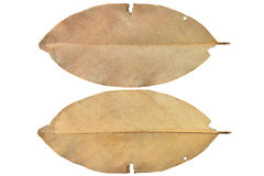 Dry leaves. Double dried leaves isolate on white background Royalty Free Stock Photos