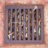 Dry Leaves in Drain. Dried leaves under metal grate, grill, covering drain Royalty Free Stock Photos