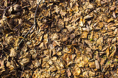 Dry leaves early spring. background Royalty Free Stock Photo