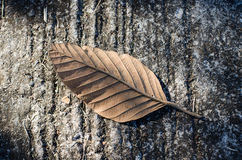 Dry leaves that fall on the floor Royalty Free Stock Photos