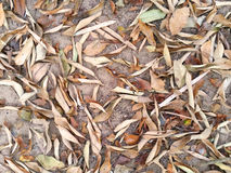 Dry leaves fall on ground as background Stock Photos