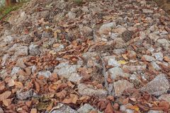 Dry leaves fall on the ridge of a rock royalty free stock photo