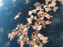 Dry Leaves and Feathers Floating on a Pond Surface with Clouds Reflection. Royalty Free Stock Image