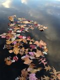 Dry Leaves and Feathers Floating on a Pond Surface with Clouds Reflection. Stock Image