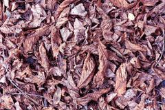 Dry leaves on the floor Royalty Free Stock Image
