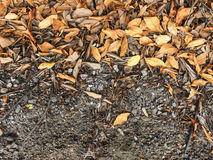Dry leaves. The floor of a forest is covered with dry leaves and twigs Stock Image