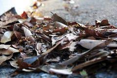 Dry leaves on floor Stock Photo
