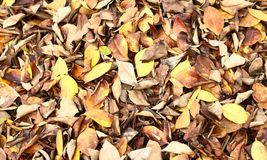 Dry leaves Royalty Free Stock Photography