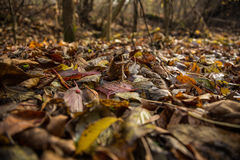 Dry leaves in the forest.. Stock Photo