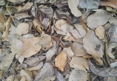 Dry leaves on the forest floor. Perform a work of art worthy of a palatial tapestry Royalty Free Stock Images