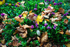 Dry leaves in garden flowers Royalty Free Stock Image