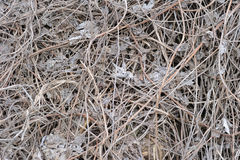 Dry Leaves and Grass. Background made of dry dead leaves and grass Stock Images