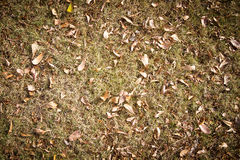 Dry leaves on grass for background and texture Stock Photo