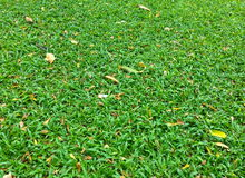 Dry leaves on the green grass on autumn Royalty Free Stock Images