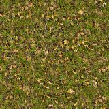 Dry Leaves on Green Grass. Seamless Texture. Royalty Free Stock Photo