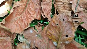 Dry leaves on green Stock Photos