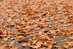 Dry leaves on grey road Royalty Free Stock Photo