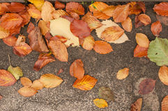 Dry leaves on grey road Royalty Free Stock Image