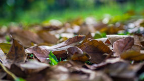 Dry leaves on the ground in autumn. Dry leaves fall on the ground with vibrant color of background Stock Images