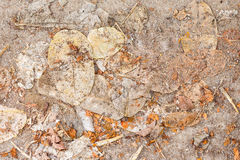 Dry leaves on the ground. Brown dry leaves on the ground Stock Images