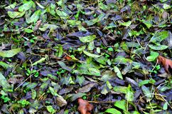 Dry leaves on the ground. Dry leaves can protect the lawn from frost, conserving moisture in the soil and can also fertilize the soil royalty free stock image