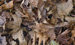 Dry leaves in the ground. Closeup shot of Dry leaves for background Stock Photo