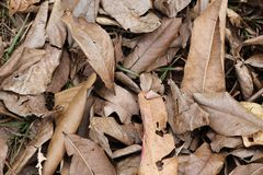 Dry leaves on the ground Stock Images