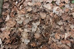 dry leaves on the ground in the forest stock image