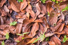 Dry leaves on the ground Royalty Free Stock Images