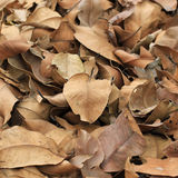 Dry leaves on the ground. A lot of dry leaves on the ground Royalty Free Stock Photography