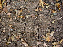 Dry leaves on ground Stock Photo