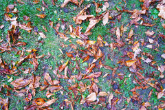 Dry leaves on the ground. Dry yellow leaves and some grass on the ground Royalty Free Stock Photo