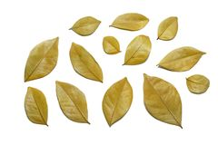 Dry leaves isolated on white background. stock photo