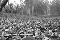 Dry leaves. In a jungle in autumn season Royalty Free Stock Photo